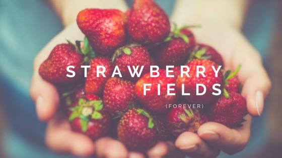 Weekend Wanderings: PickingStrawberries